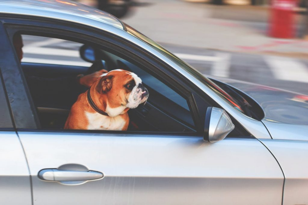 Traveling Pets: Tips to Helping Your Pets When You Move